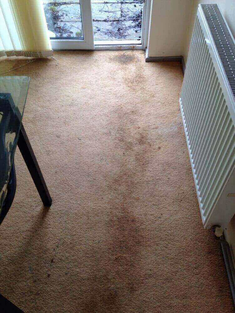 upholstery cleaning Leamington Spa
